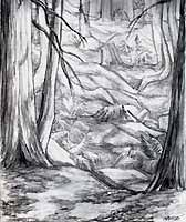 Drawn scenic forest Sketch/ Island Forest Sale drawing