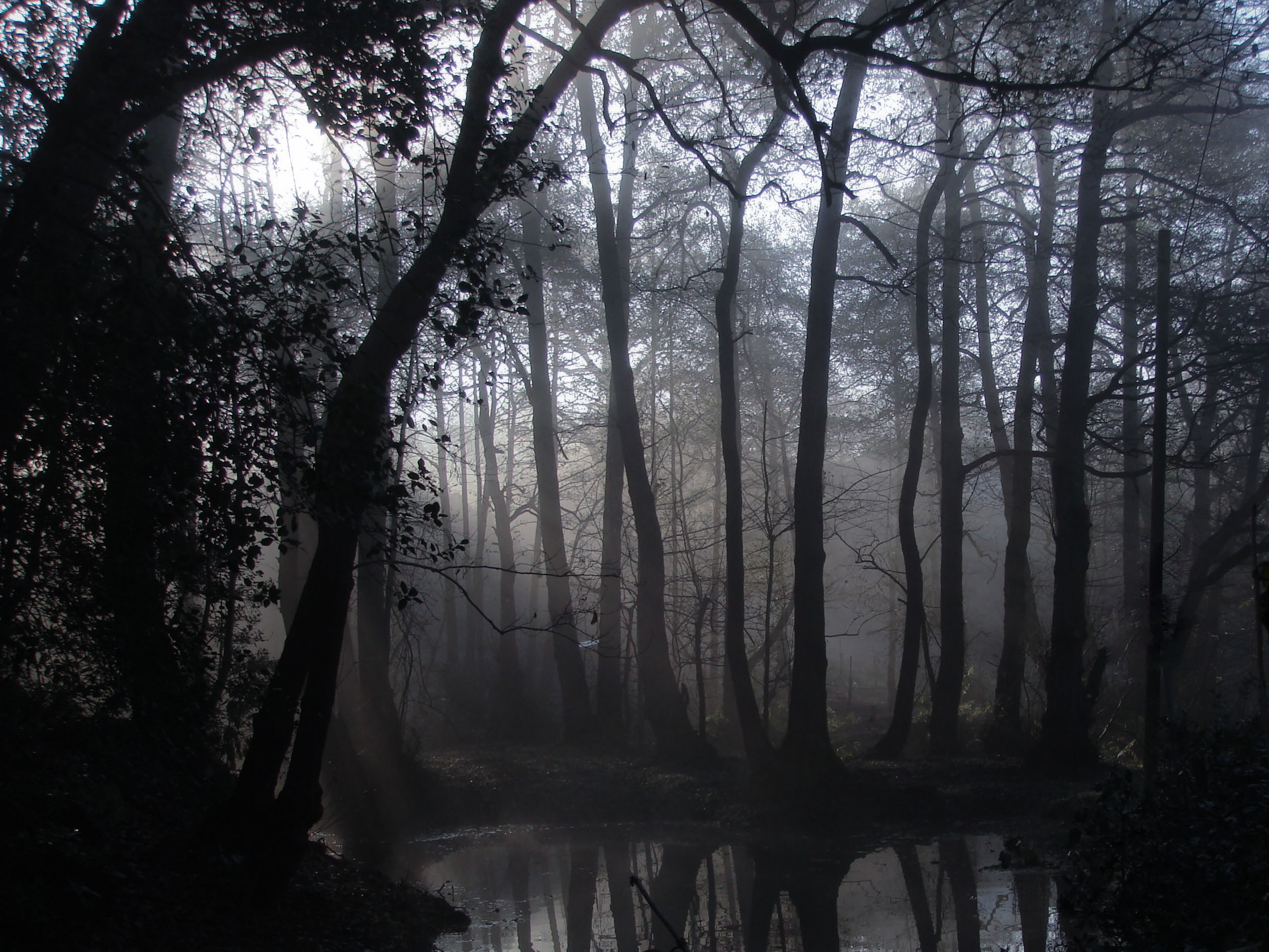 Drawn forest spooky Flickr  Fagerlund via morning