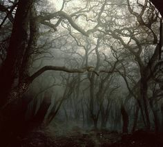 Drawn forest spooky Mist nature landscape Spooky fog