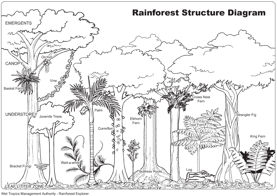 Drawn rainforest rainforest tree Sheet Results Image Yahoo Forest