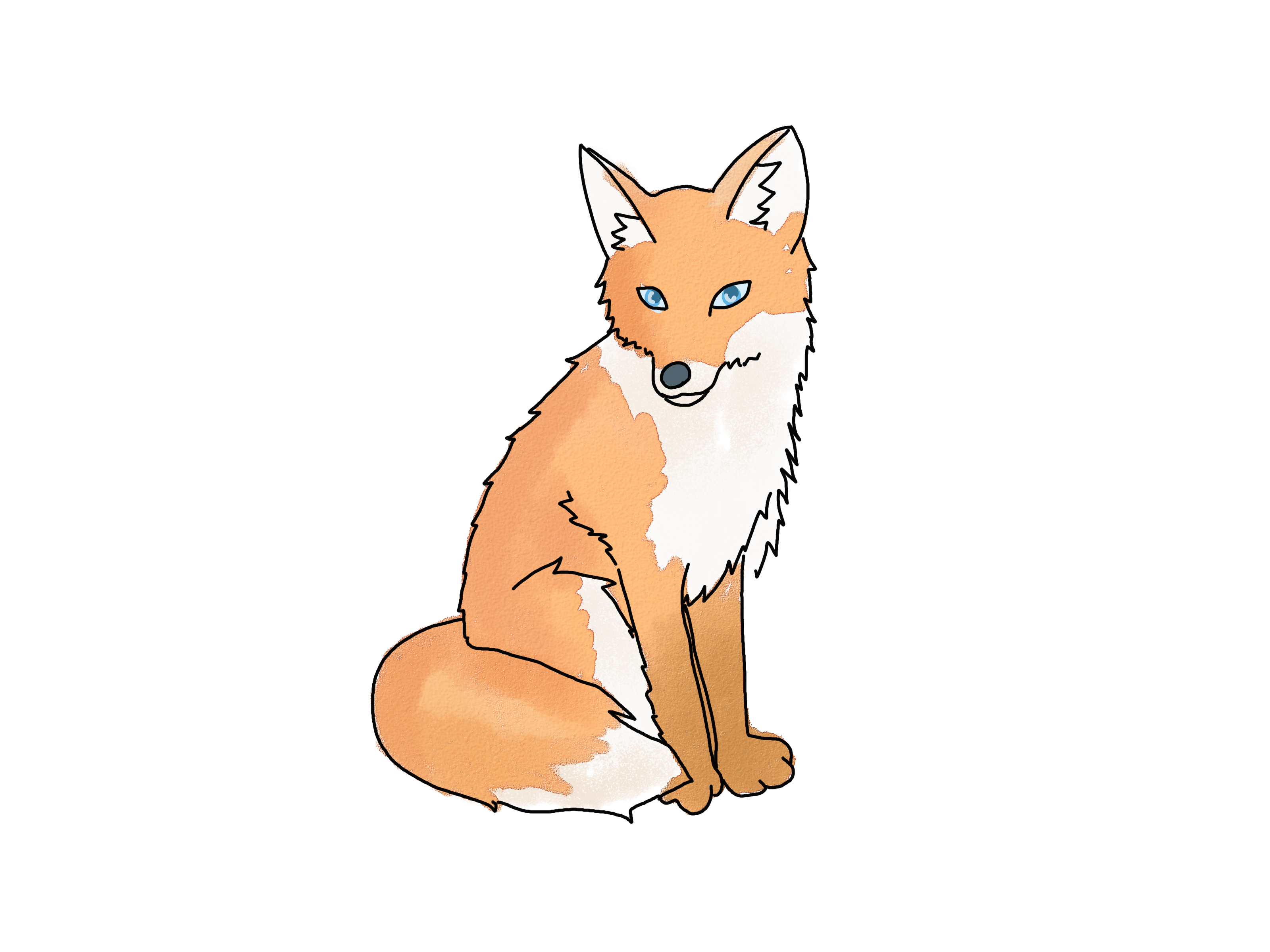 Drawn fox 312 Find best more on