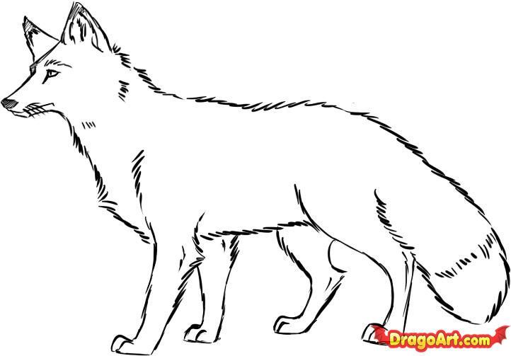 Drawn fox Red how Fox red fox