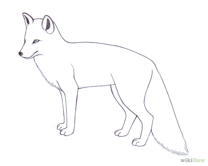 Drawn fox Lessons 4 and a Fox