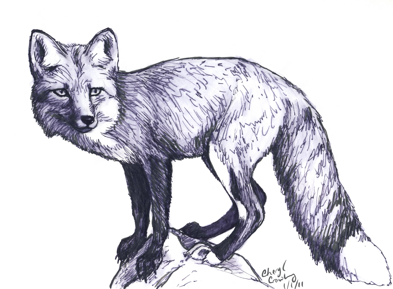 Drawn fox Red silvercrossfox Fox drawing Sketch