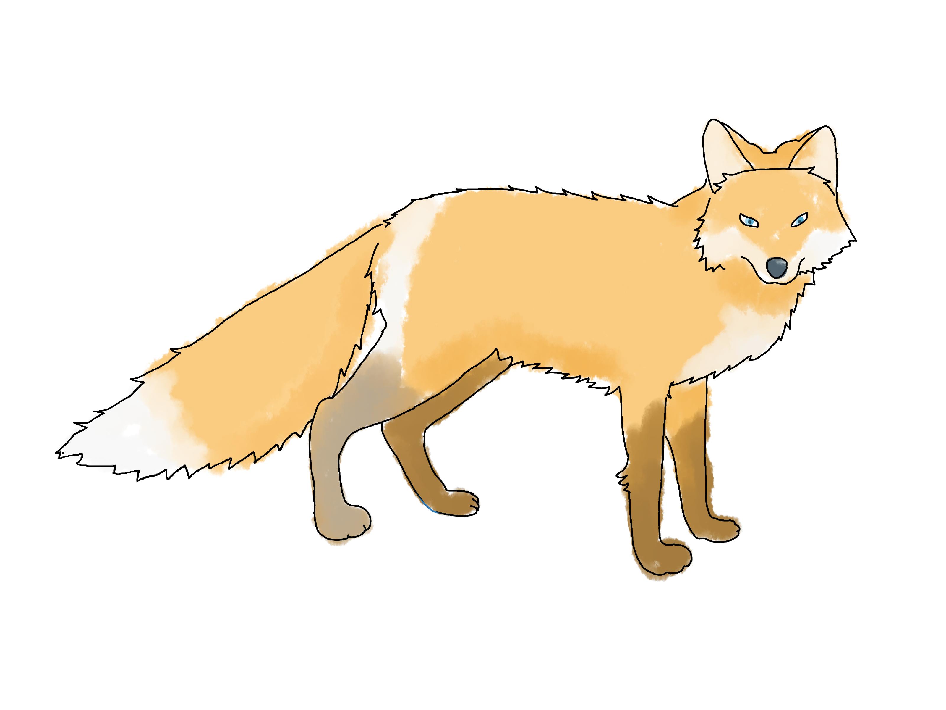 Drawn fox  Draw a wikiHow 4