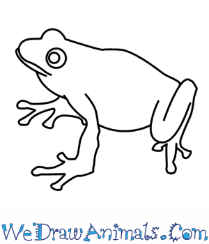 Drawn frog A Frog How To