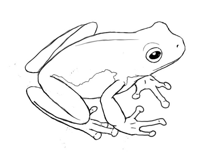 Drawn frog Pinterest Frog on Frog Best