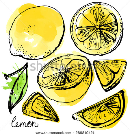 Drawn lemon fruit #4