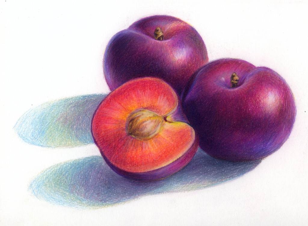 Drawn still life pencil color Yurkovich colored Lauren pencil »