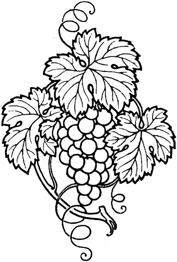 Drawn grapes realistic Outline Coloring Grapes outline Drink