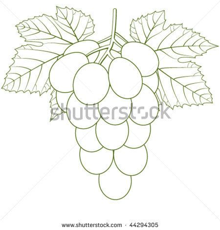 Drawn grapes cluster GRAPES/WINE Pinterest 44294305 Shutterstock Stock
