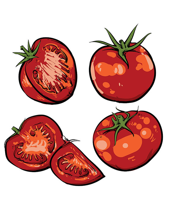 Drawn tomato Tomato Vegetable tomato Sale