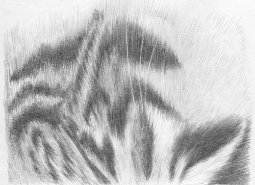 Drawn fur 102 [Archive] Class Drawing Basic
