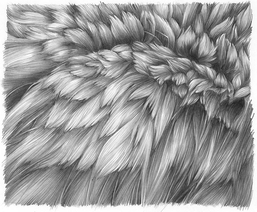 Drawn fur Fur Chimera L pencil by