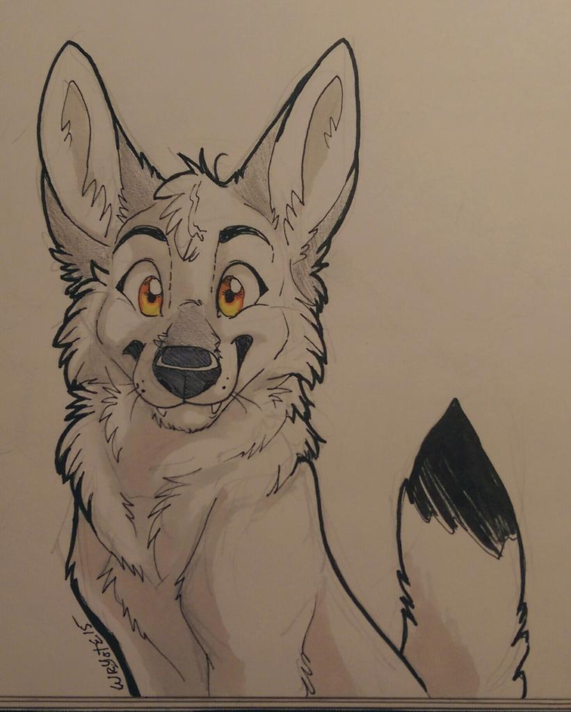 Drawn furry Coyote Very : on @Wryote