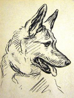 Drawn german pinscher German Draw Pinterest inspire