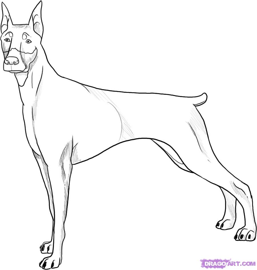 Drawn german pinscher Pincher a FREE to 5
