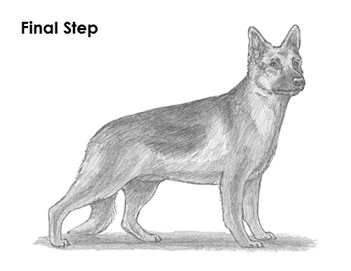Drawn german pinscher How Dog Shepherd a Dog