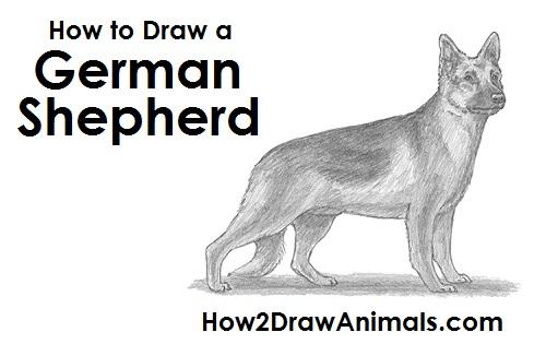 Drawn german shepherd To Draw German Draw Shepherd