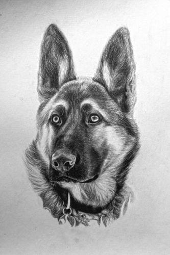 Drawn german shepherd  pencil Original Drawing Art