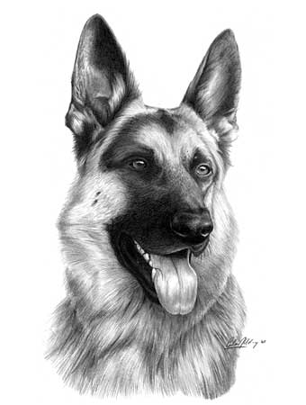 Drawn german shepherd By by Giles Shepherd' pencil
