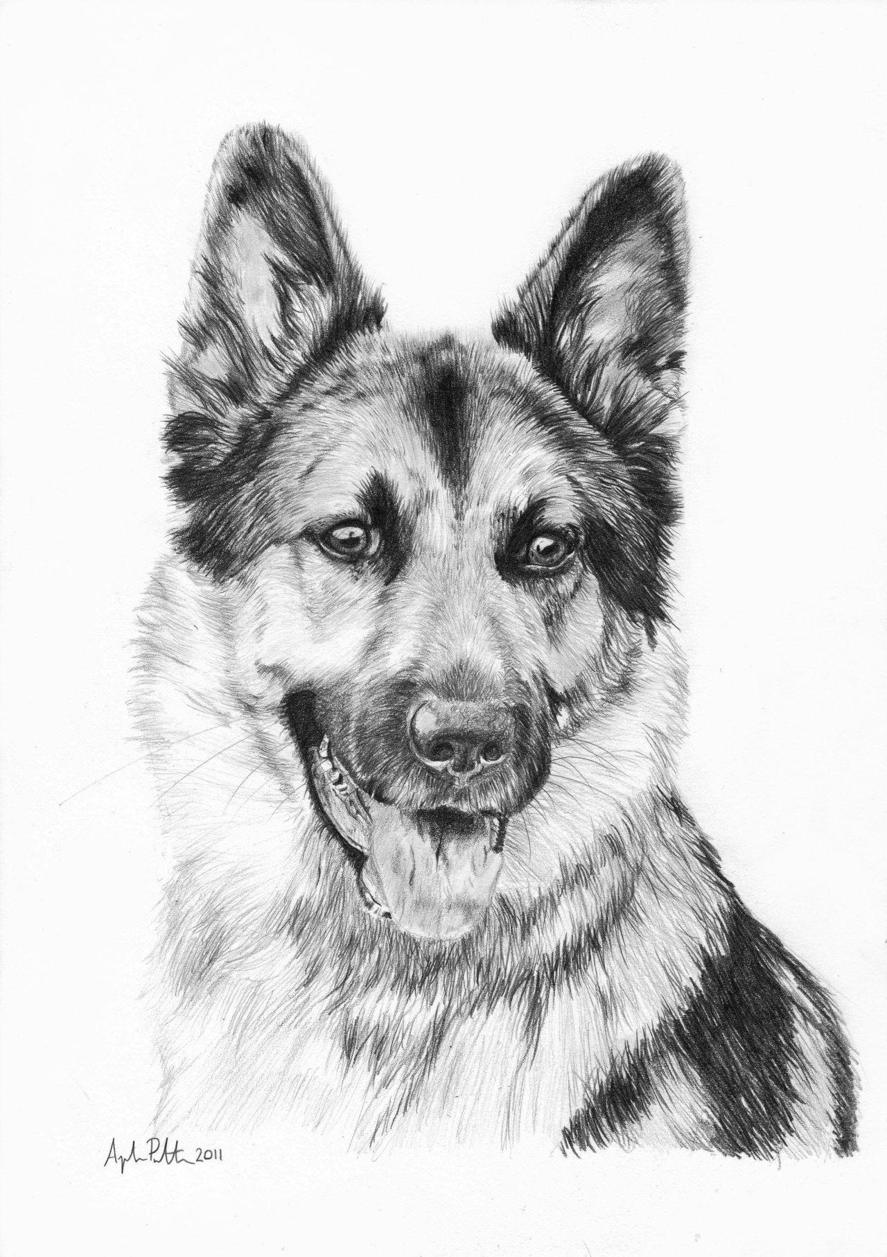 Drawn german shepherd DeviantArt on DeviantArt German Loukya