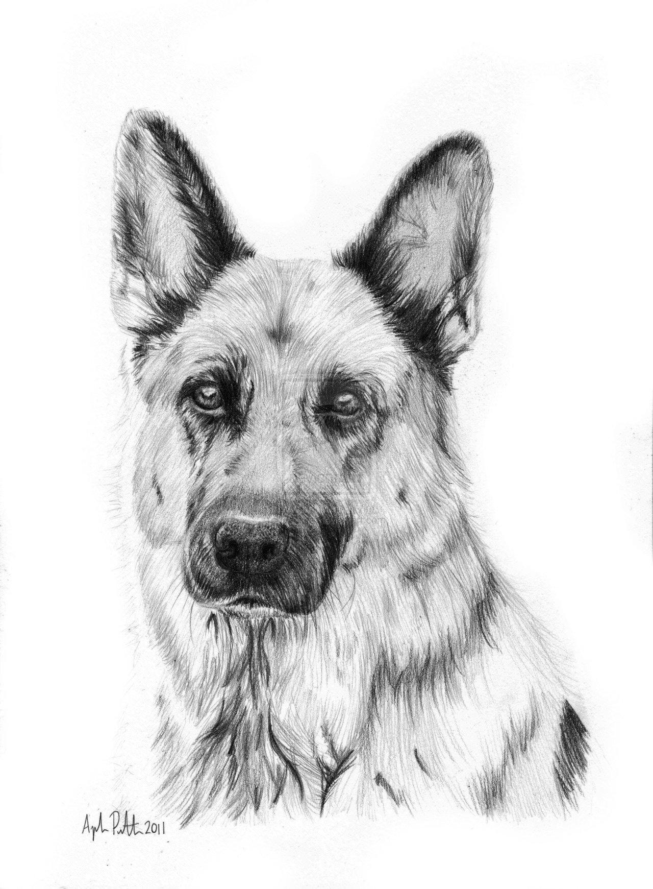 Drawn german shepherd A beginners shepherd step puppy