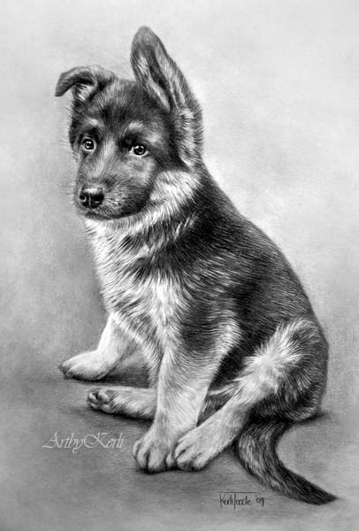Drawn puppy german shepherd More #Shepherds #Drawings this #German