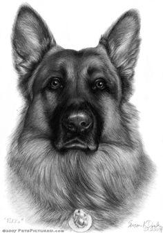Drawn hawk german Shepherd German Original german shepherd