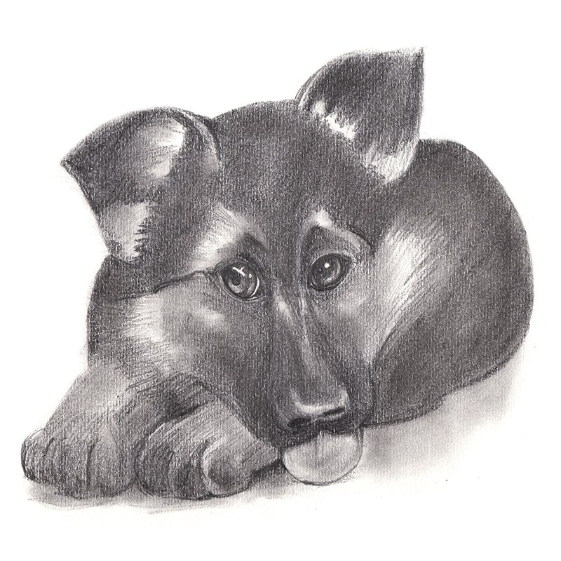 Drawn puppy pencil sketch Drawing Puppy How Pencil of