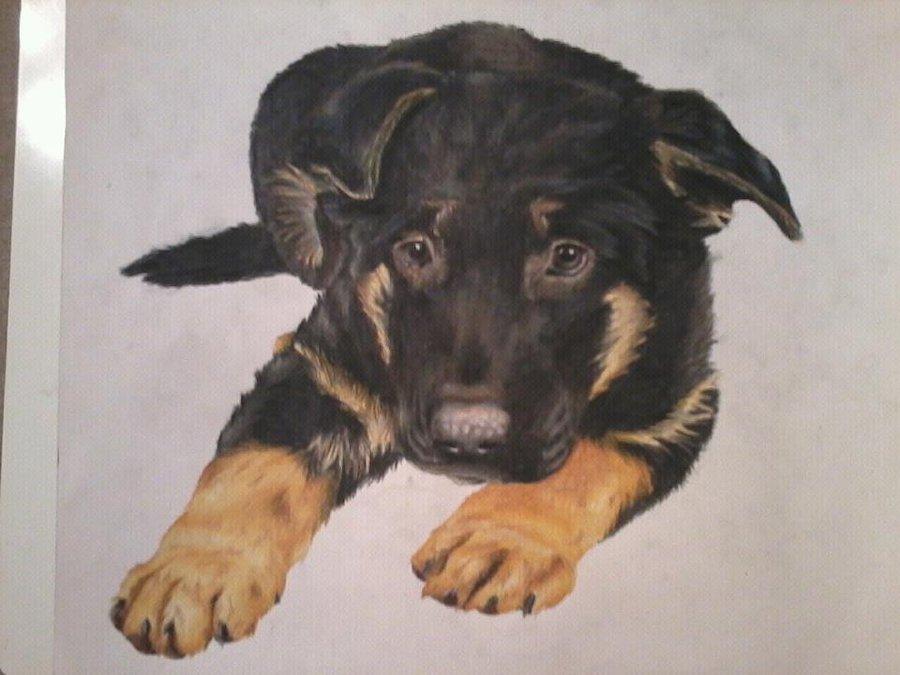 Drawn puppy german shepherd DrawingMaster1 Shepherd DrawingMaster1 German Puppy: