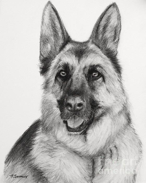 Drawn hawk german Best Shepherd Art in Charcoal