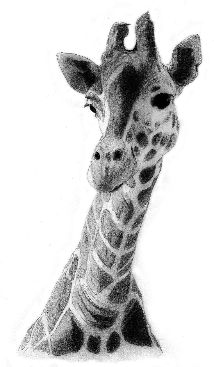 Drawn giraffe Drawing Giraffe drawing Best ideas