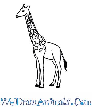 Drawn giraffe How To Draw  A