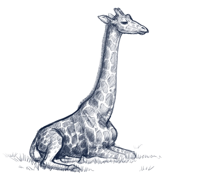 Drawn giraffe For > Of For A