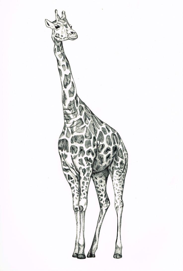Drawn giraffe Biro Drawing on Best Giraffe