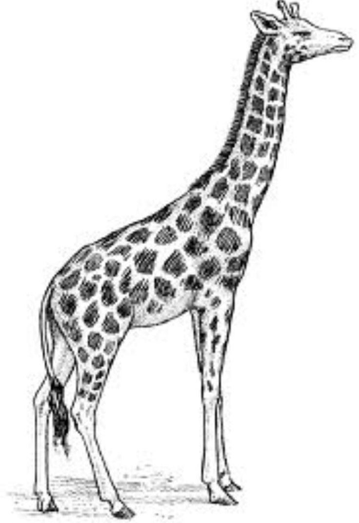 Realistic clipart giraffe #6