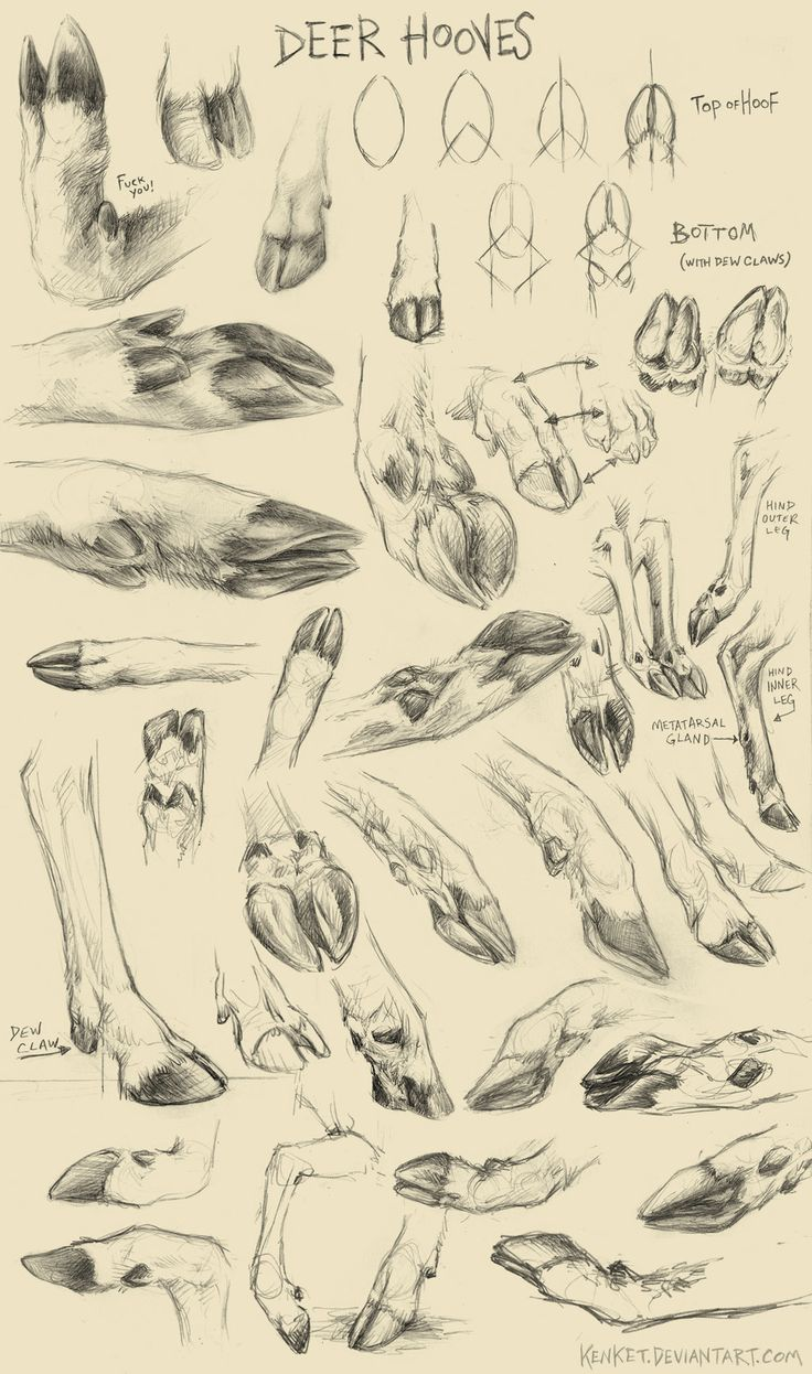 Drawn buck hand drawn Me very to Deer 25+