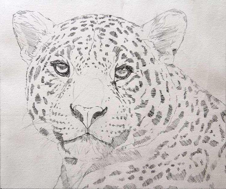 Drawn jaguar cougar Best where  is on