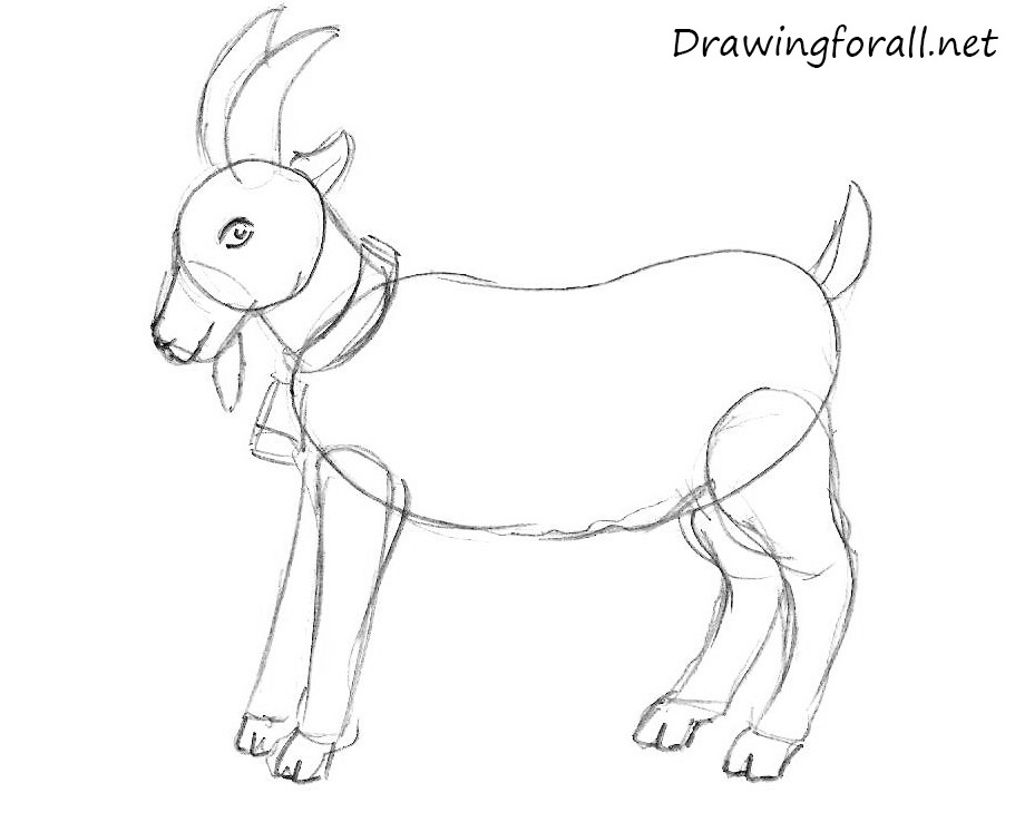 Drawn goat DrawingForAll How a for beginners