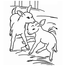 Drawn goat baby goat Baby Farm Coloring Top Cute