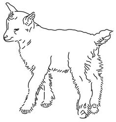 Drawn goat baby goat Offers Goats of line boer