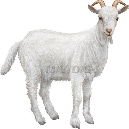 Mountain Goat clipart chiva #11