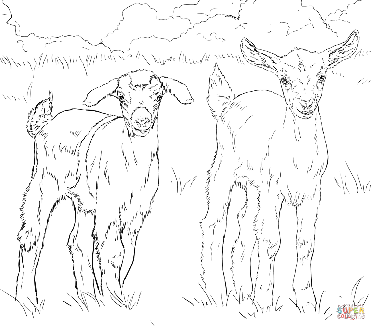 Mountain Goat clipart colouring #12