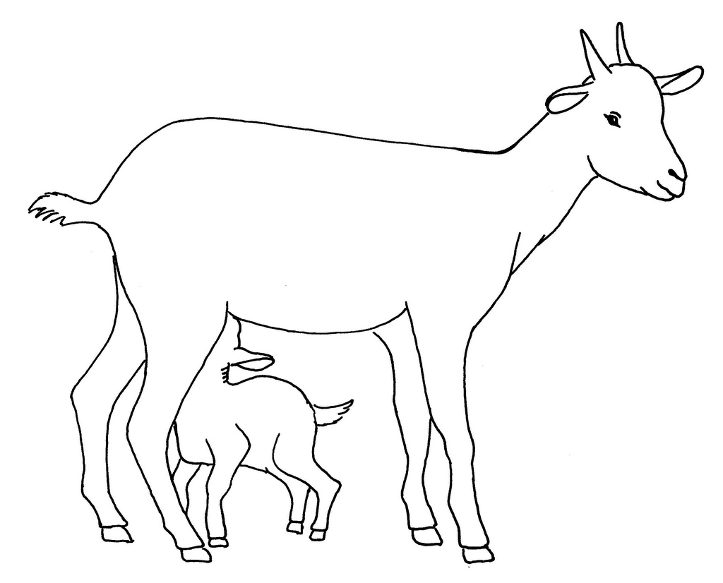 Drawn goat for kid step by step animal Of with Research Line
