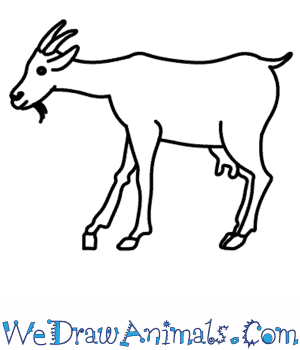 Drawn goat for kid step by step animal  Draw Goat to How