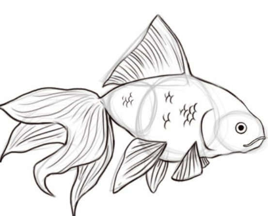 Drawn gold fish Ago to 2 Pictures) 9