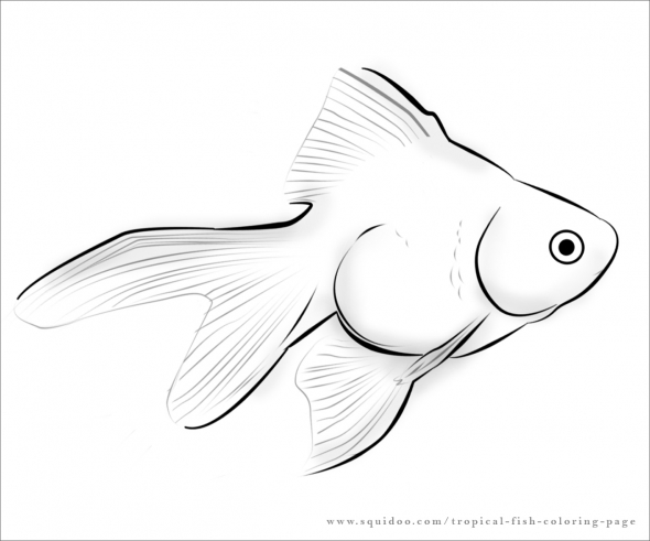 Drawn gold fish Coloring Crafty Tropical fish Pinterest