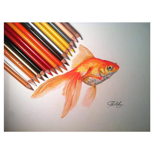 Drawn gold fish Drawing Gold Pencil Drawing Drawing