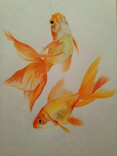 Drawn gold fish For Gold fish Pinterest In